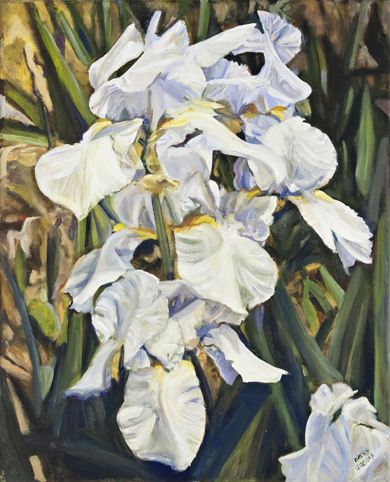 "White Bearded Iris oil 20"" x 16"" $480.00"